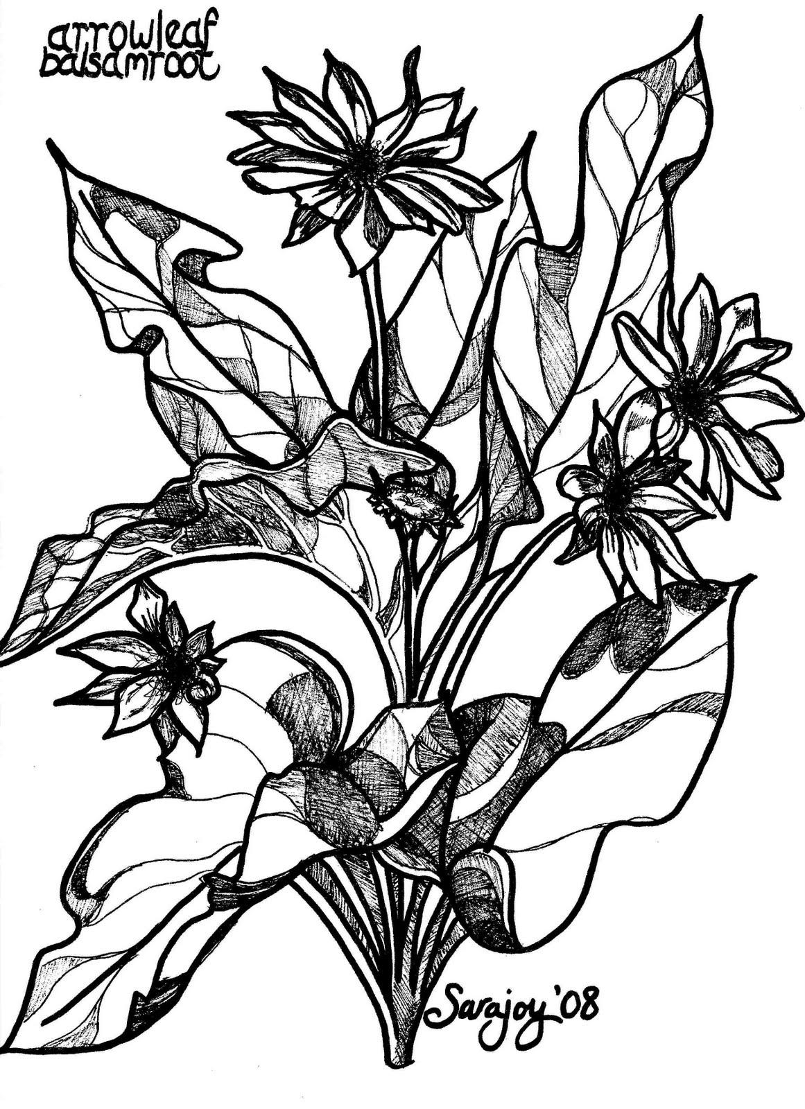 Arrowleaf Balsam Root svg #13, Download drawings