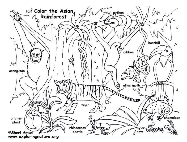 Asian coloring #10, Download drawings