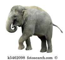 Asian Elephant clipart #16, Download drawings