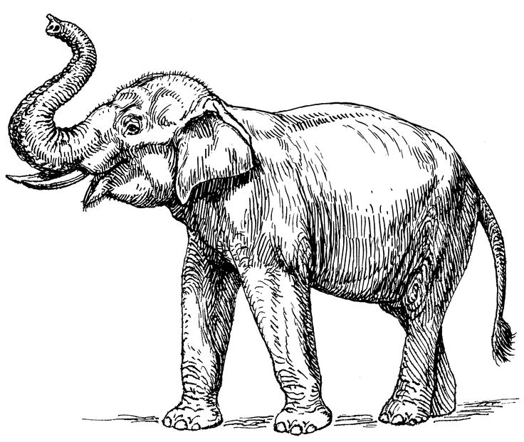 Asian Elephant clipart #1, Download drawings