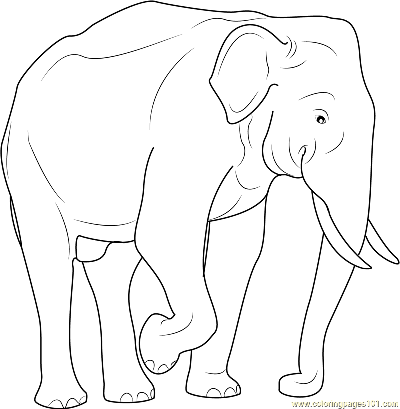 Download Asian Elephant coloring for free - Designlooter ...