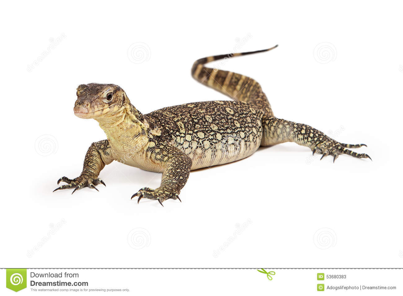 Asian Water Monitor clipart #20, Download drawings