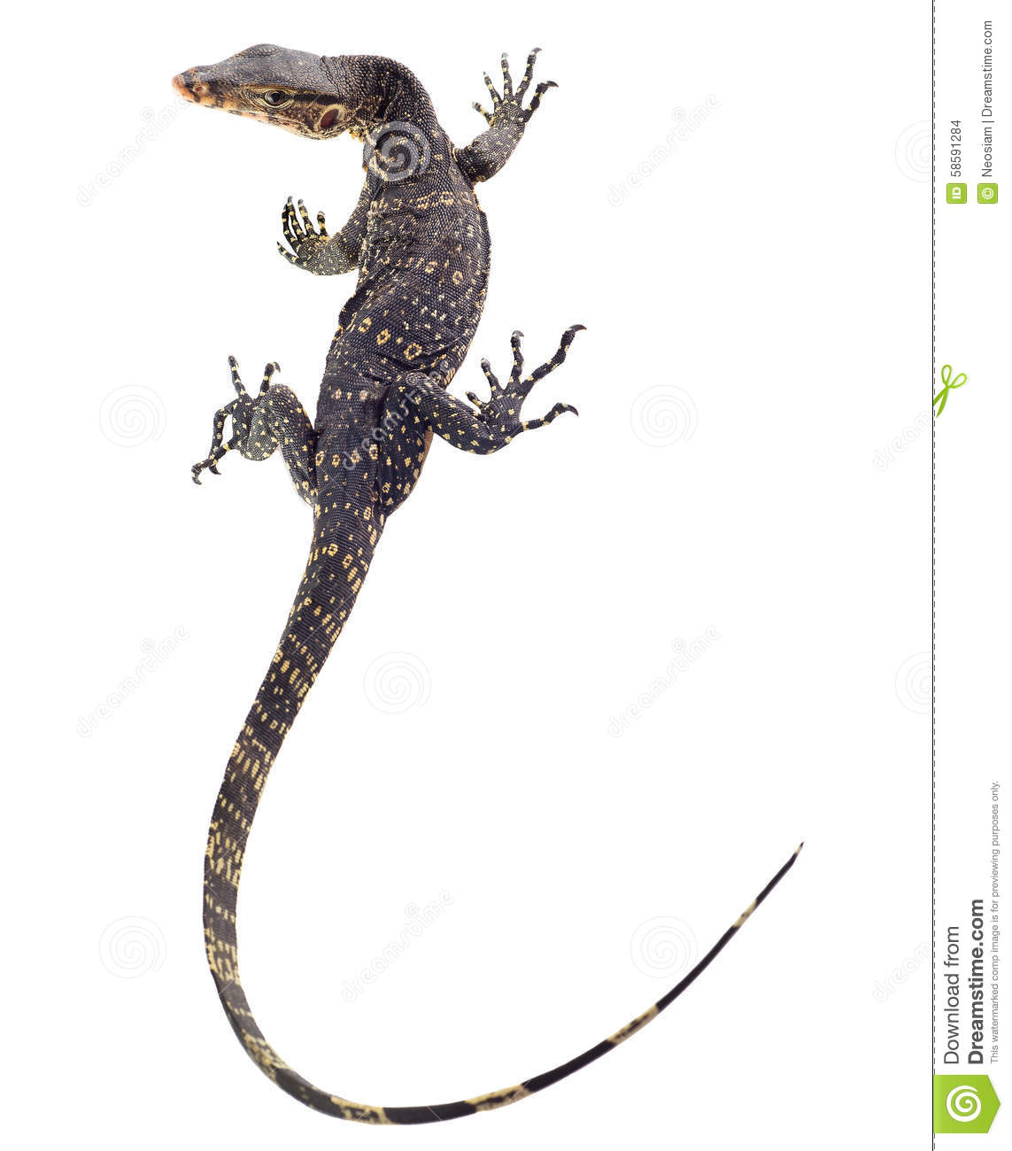Asian Water Monitor clipart #9, Download drawings