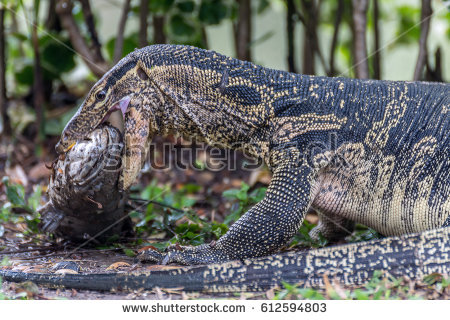Asian Water Monitor clipart #2, Download drawings