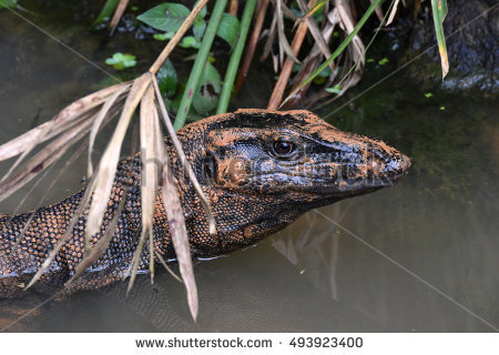 Asian Water Monitor clipart #1, Download drawings