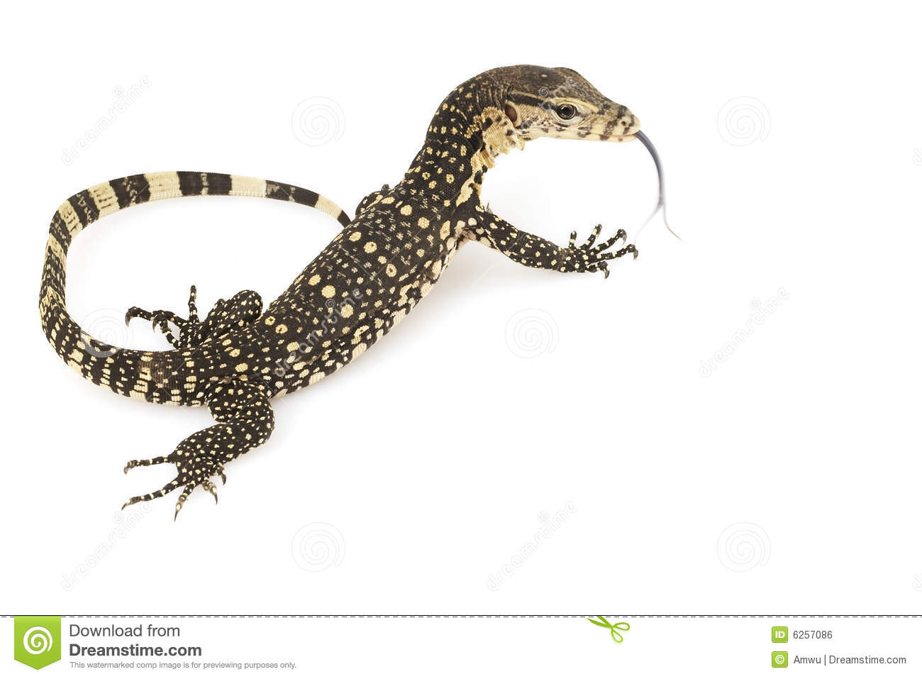 Asian Water Monitor clipart #19, Download drawings