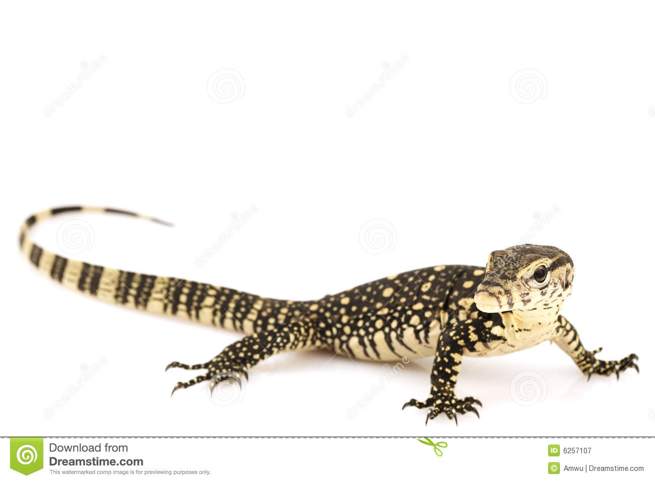 Asian Water Monitor clipart #18, Download drawings