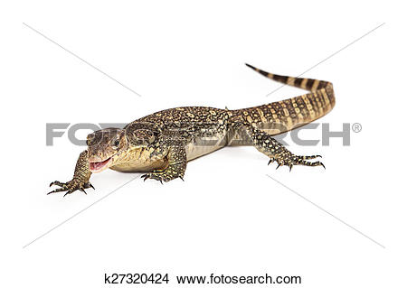 Asian Water Monitor clipart #16, Download drawings