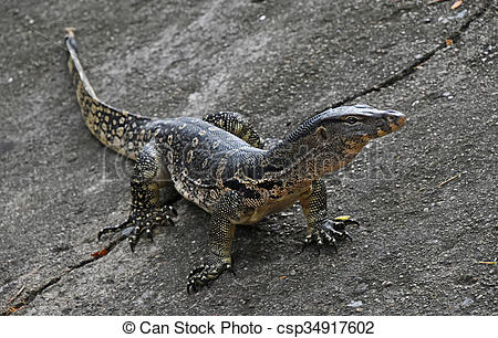 Asian Water Monitor clipart #14, Download drawings