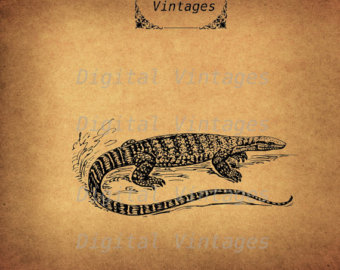 Asian Water Monitor svg #18, Download drawings