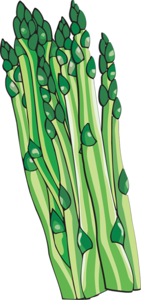 Asparagus clipart #8, Download drawings