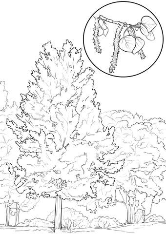 Aspen coloring #4, Download drawings