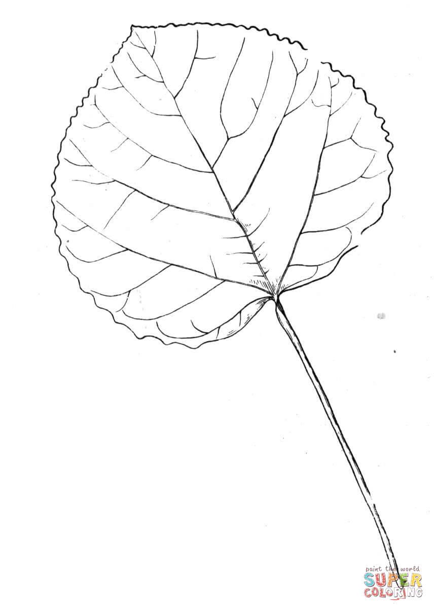 Aspen coloring #9, Download drawings
