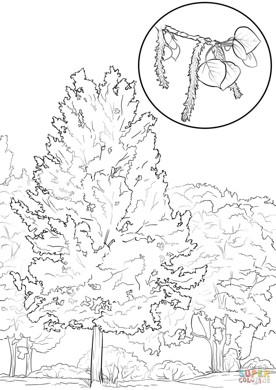 Aspen coloring #5, Download drawings