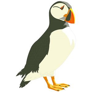 Puffin clipart #6, Download drawings