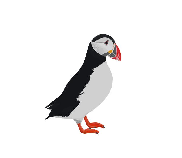 Atlantic Puffin clipart #1, Download drawings