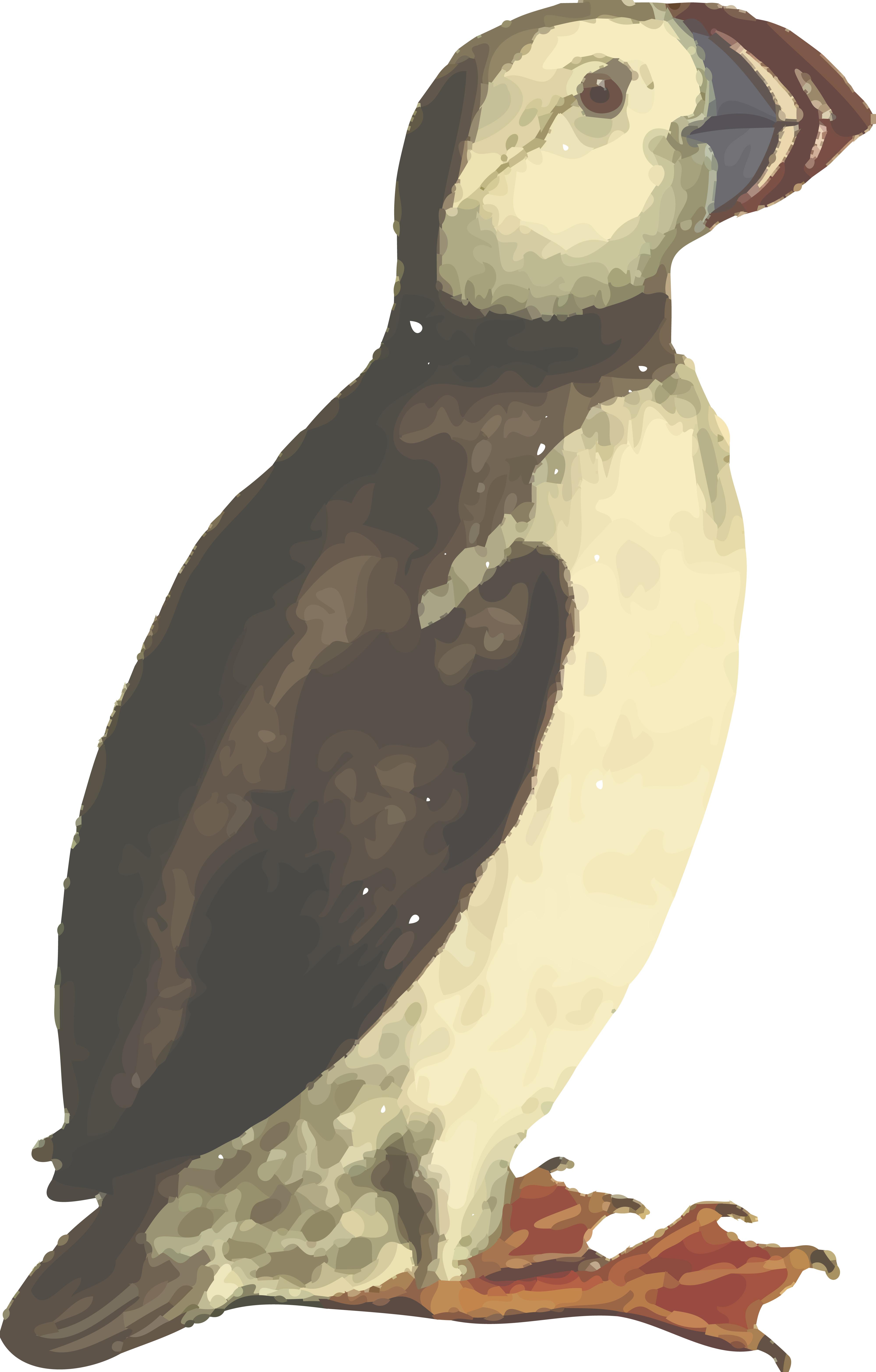 Atlantic Puffin svg #7, Download drawings