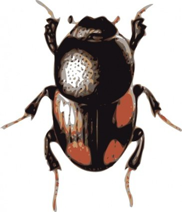 Atlas Beetle clipart #11, Download drawings