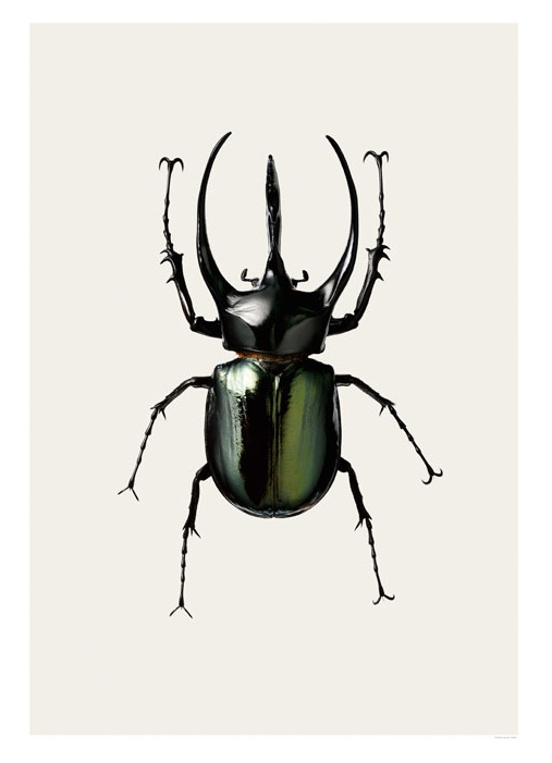 Atlas Beetle clipart #4, Download drawings