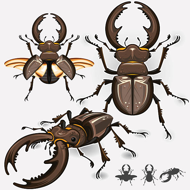 Atlas Beetle clipart #20, Download drawings