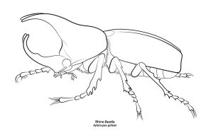 Rhinoceros Beetle coloring #16, Download drawings