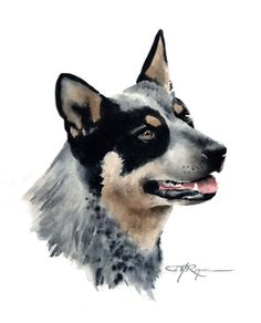 Australian Cattle Dog clipart #14, Download drawings