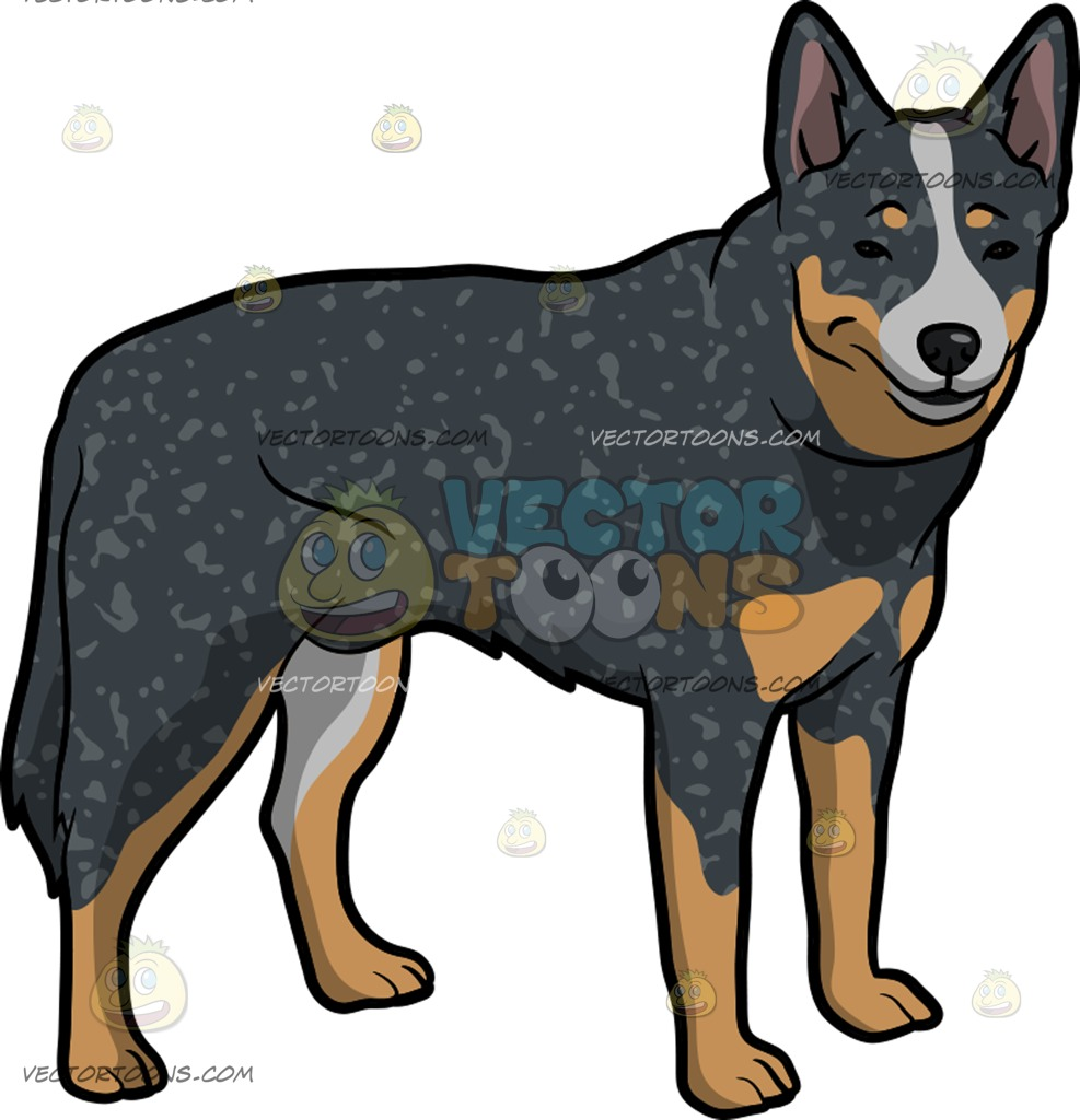 Australian Cattle Dog clipart #5, Download drawings