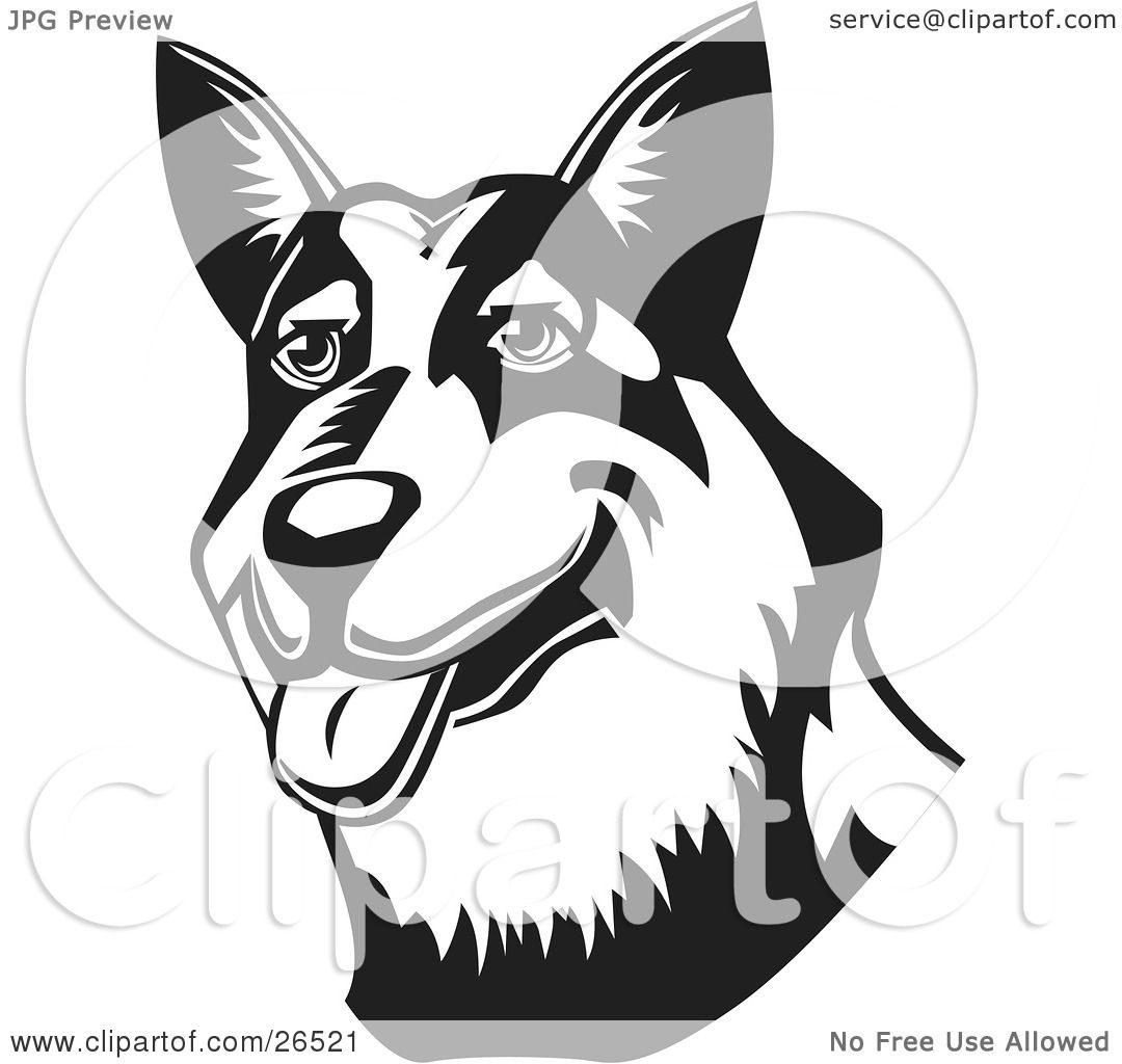 Australian Cattle Dog clipart #4, Download drawings