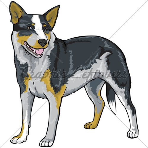 Australian Cattle Dog clipart #6, Download drawings