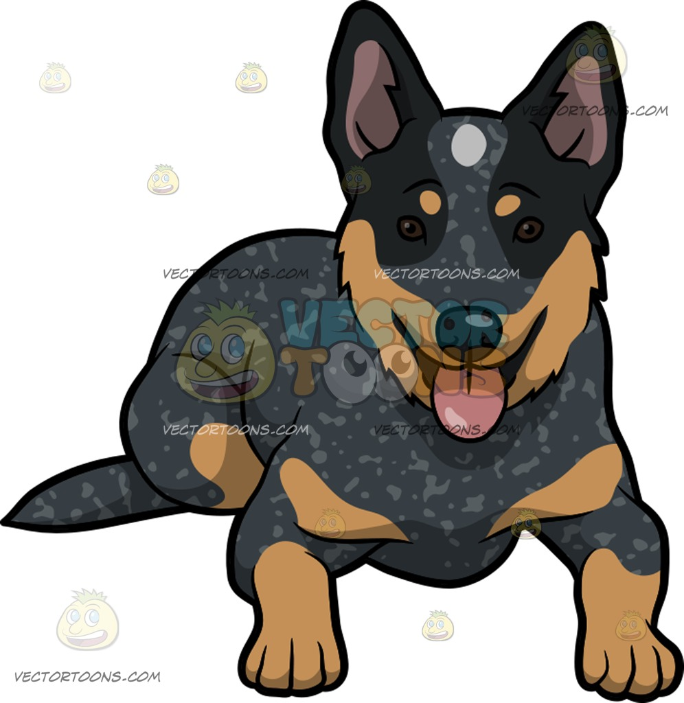 Australian Cattle Dog clipart #13, Download drawings