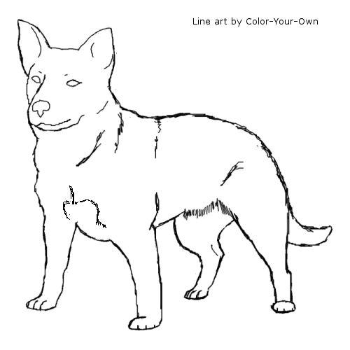 Australian Cattle Dog coloring, Download Australian Cattle ...