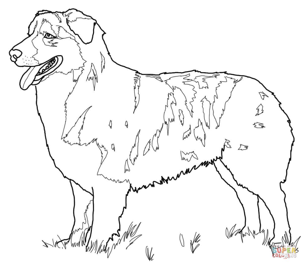 Australian Shepherd coloring #16, Download drawings