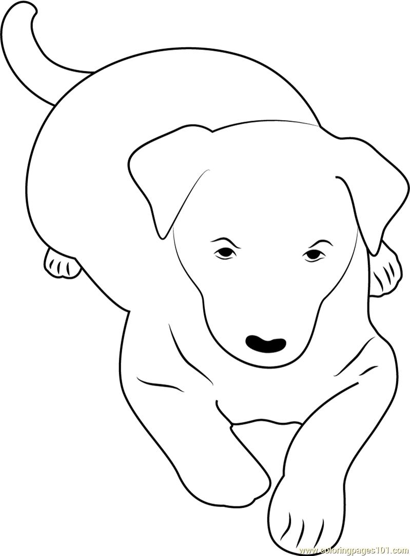 Kelpie coloring #20, Download drawings