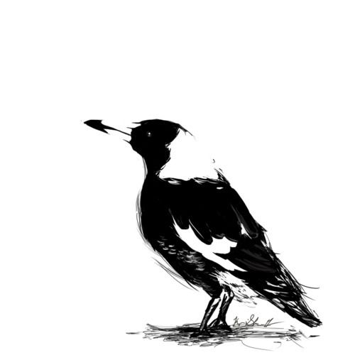 Australian Magpie clipart #9, Download drawings