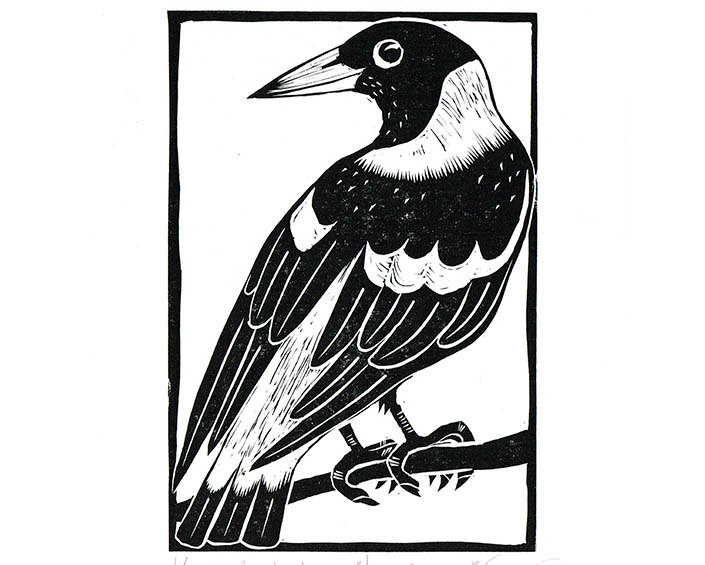 Australian Magpie clipart #11, Download drawings