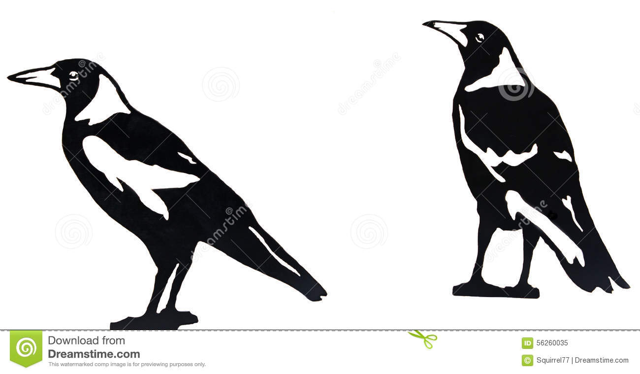 Australian Magpie clipart #13, Download drawings
