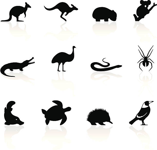 Australian Magpie clipart #6, Download drawings