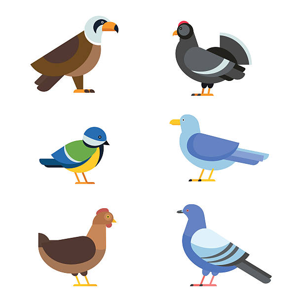 Australian Magpie clipart #3, Download drawings