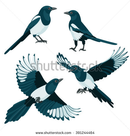 Australian Magpie clipart #2, Download drawings
