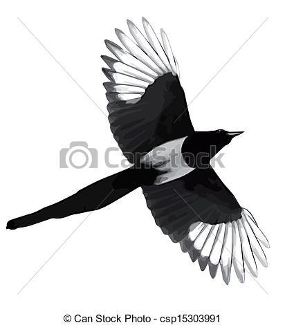 Magpie clipart #9, Download drawings