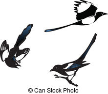 Magpie clipart #20, Download drawings
