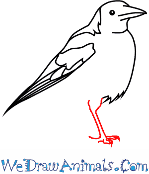 Australian Magpie coloring #14, Download drawings
