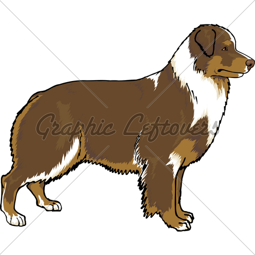 Australian Shepherd clipart #5, Download drawings
