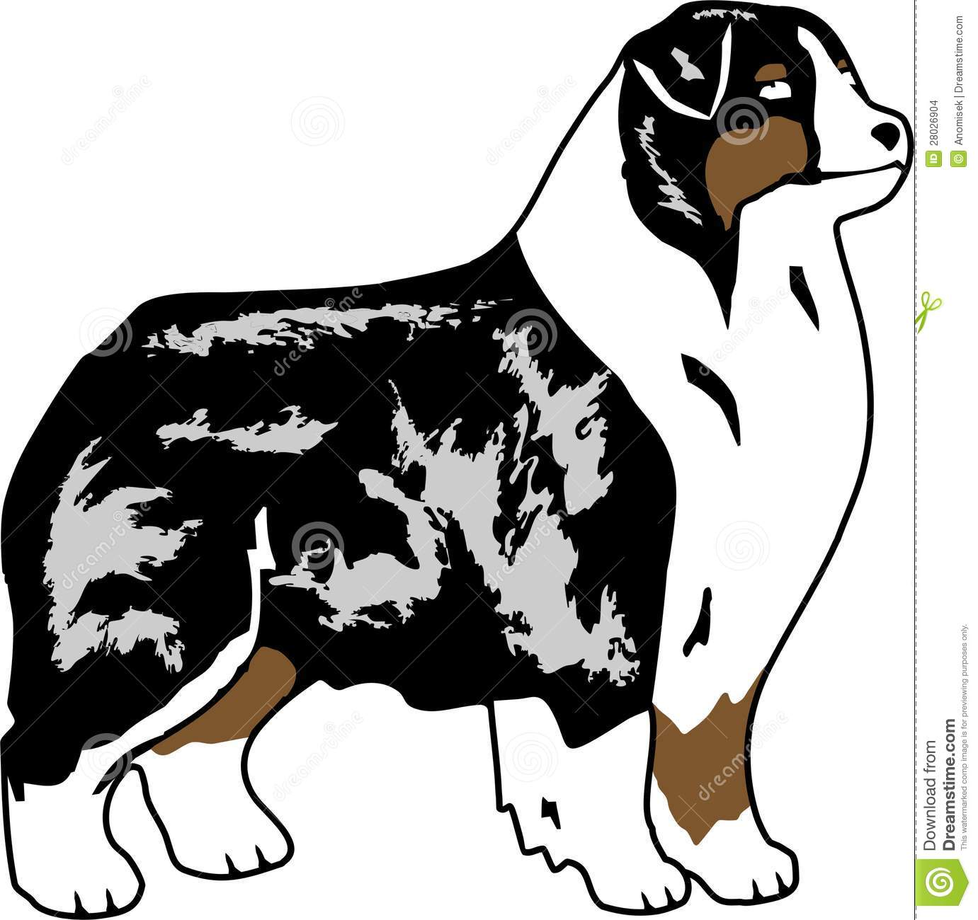 Australian Shepherd clipart #9, Download drawings