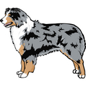 Australian Shepherd clipart #4, Download drawings