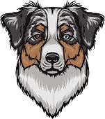 Australian Shepherd clipart #16, Download drawings