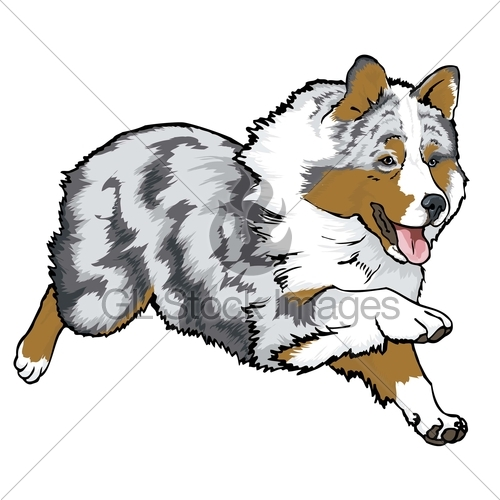 Australian Shepherd clipart #8, Download drawings