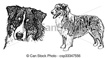 Australian Shepherd clipart #12, Download drawings
