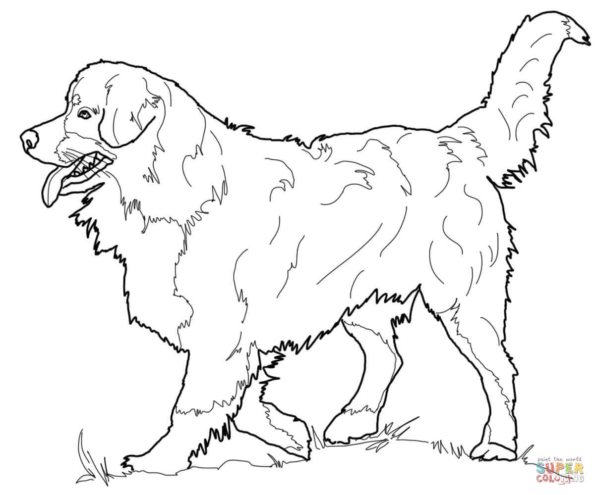 Bernese Mountain Dog coloring #8, Download drawings