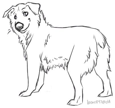 Australian Shepherd coloring #6, Download drawings